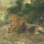 Aitana Lion