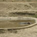 Hippo at Aitana